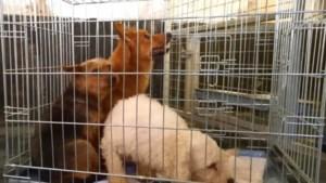 Foute fokker dit jaar voor tweede keer honden kwijt, instanties hopen op strengere wetgeving
