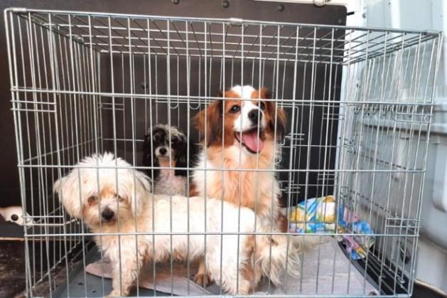 Limburgse fokker opnieuw in de fout: alle honden weggehaald