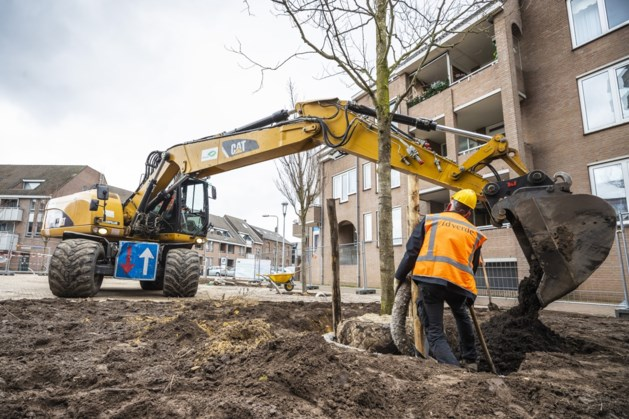 Venray wil minimaal 45.000 nieuwe bomen planten