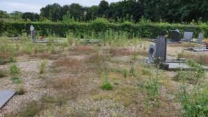 Azijn en zout halen niets uit tegen onkruidexplosie op kerkhof Obbicht, dus toch maar weer gif: 'We konden het niet meer aanzien'