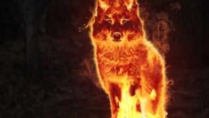 Protest tegen rooftochten van wolven in Limburgse grensstreek