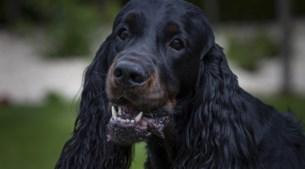 Heike uit Baexem redt tot doodverklaarde puppy Bently