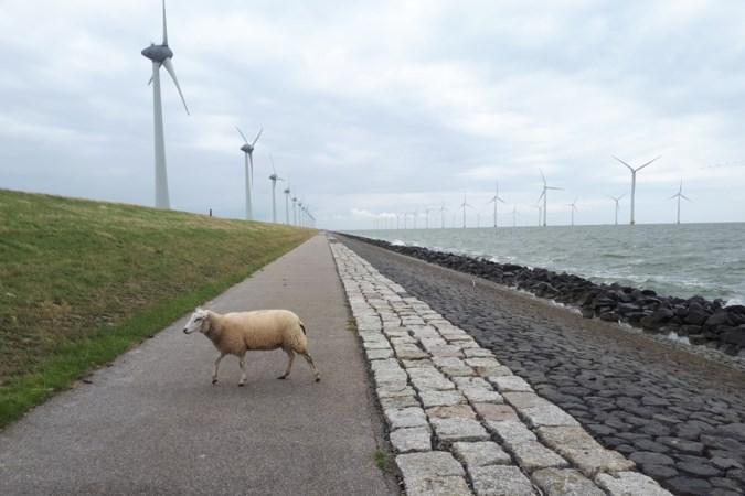 Drie weken fietsend Nederland door: op het stalen ros komt aan alles een eind, zolang je maar doortrapt