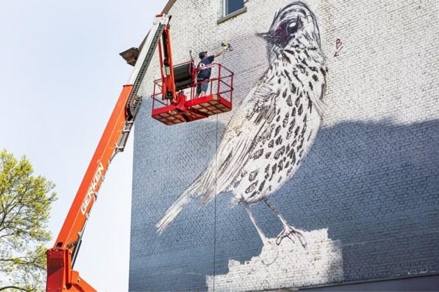 Maastrichtse jongeren maken murals met kunstenaar Collin van der Sluijs