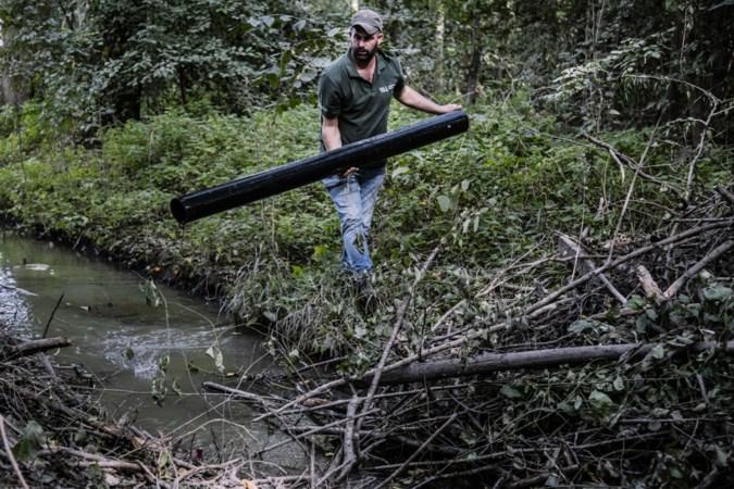 Buis in Kingbeek om bevers en natuur te beschermen door onbekenden weggehaald