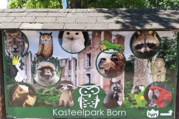 Geen eenrichtingsroute meer, De Koelekop weer open; vanaf zaterdag minder maatregelen in Kasteelpark Born