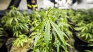 Zeventien wietplanten in de tuin niet genoeg voor sluiting huis, tien gram cocaïne wel