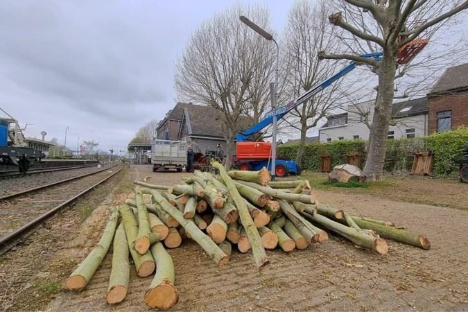 Wie heeft het Horster college onjuist geïnformeerd over biomassacentrales die hout stoken?