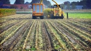 Boeren opgelucht: ministerie verleent uitstel voor oogsten maïs tot 31 oktober