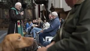 Snoopy, Max en Tommie wachten braaf op het wijwater tijdens dierenzegening in de kerk