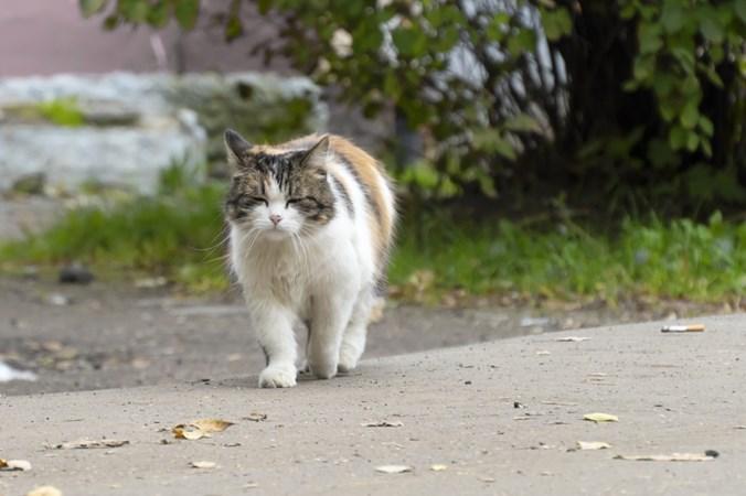 Zwerfkatten zorgen voor overlast in Stein: poep in achtertuinen en bloembedden omgeploegd