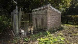 Limburgs enige monumentale hondenhok voor labrador Otter en springer Pear