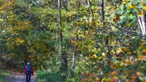 Gedichtenwandeling met aandacht voor natuur en poëzie door het Jaomerdal