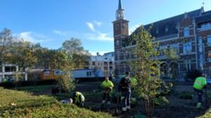 Fontein vol afval aan gemeentehuis Maasmechelen maakt plaats voor weelderige tuin