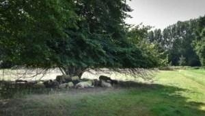 Nieuwe enquête over vakantiepark bij Sittards groengebied