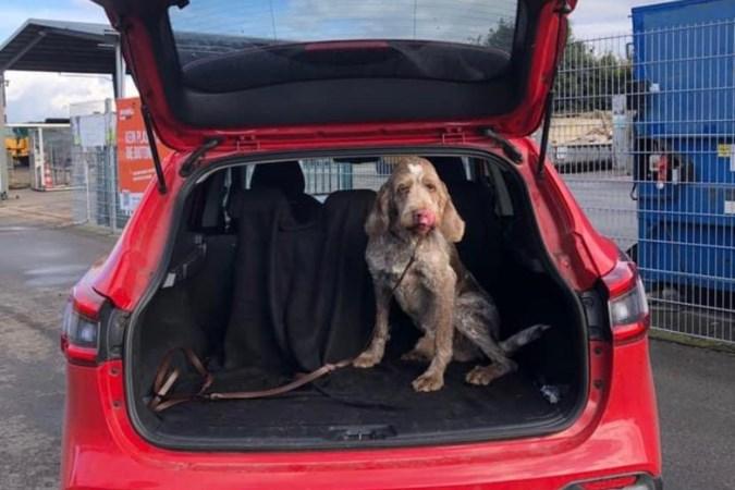Einde aan nachtmerrie baasjes gestolen hond: 'Buddy was door het dolle heen om ons weer te zien'