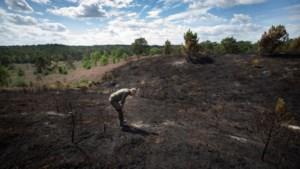 Helikopters defensie oefenen voor worst case scenario op Brunssummerheide: een onbeheersbare heidebrand