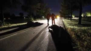 Drie loslopende pony's komen om door aanrijding in Brabant