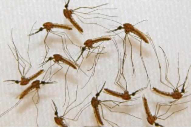 Deze zomer meer overlast van muggen dan vorig jaar