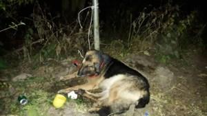 Hond Rambo dood nadat hij zwaargewond in bos in Born werd achtergelaten: baasje krijgt voorwaardelijke celstraf