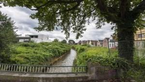 Beruchte Japanse woekerplant zorgt voor hoofdbrekens in Sittard: oevers Geleenbeek nog steeds niet verlost van ontembare kwelgeest