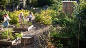 Eerste Limburgse scholieren tussen fruitbomen en insectenhotels