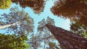 Echt-Susteren krijgt er duizenden bomen bij