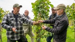 Wijngaard op de Windraak mag niet te groot groeien: 'Het moet wel een beetje exclusief blijven'