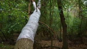 VDL Nedcar hoeft anti-vleermuisfolie niet weg te halen uit Sterrebos