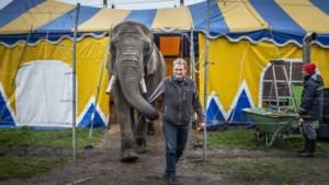 Olifant Buba en Circus Freiwald staan al bijna twee jaar muurvast in Beringe, maar gaan nu waarschijnlijk toch vertrekken