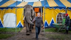 Olifant Buba en Circus Freiwald waarschijnlijk naar nieuwe plek in Limburg
