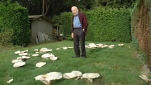 Honderd vreemde paddenstoelen groeien in tuin van Michel Thoné (92) in Maasmechelen: 'Dit is heel bijzonder'