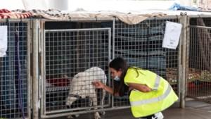 Unieke operatie: drones worden ingezet om honden die vastzitten tussen lava op La Palma te redden