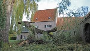 Majestueuze boom die speciaal werd geplant voor de geboorte van Beatrix geveld door de wind