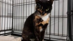 Dier van de week: nu haar kittens onderdak hebben, verdient ook mama Fientje een nieuw thuis