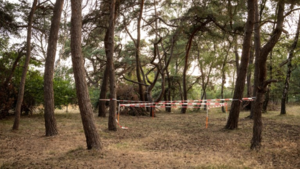 TERUGLEZEN: Deskundigen worden gehoord over misbruik en doodsoorzaak Nicky Verstappen