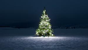 Eerste kribkesroute door Meijel met verkiezing mooiste kerststal van het dorp