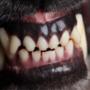 Vrouw gebeten door zwarte hond in Schadijkse Bossen in America