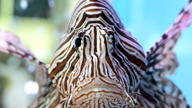 Bijeenkomst aquariumvereniging Terra Collinaria, ook niet-leden uitgenodigd
