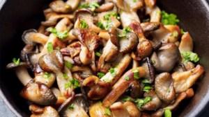 Lang leve de veelzijdige paddenstoel!