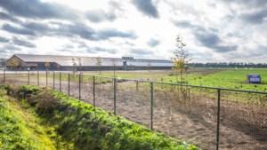 Limburgse pluimveehouders rollen van ene ophokplicht in de andere: 'We hebben nog niet veel spek op de ribben'