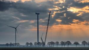 Stekelstruiken rond windmolens Ospeldijk moeten boerenlandvogels redden