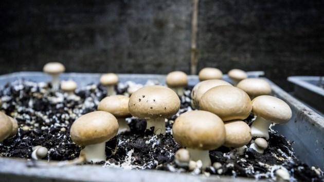 De 7,5 hectare grote champignonkwekerij in Grashoek gaat er absoluut niet komen als het aan de omwonenden ligt